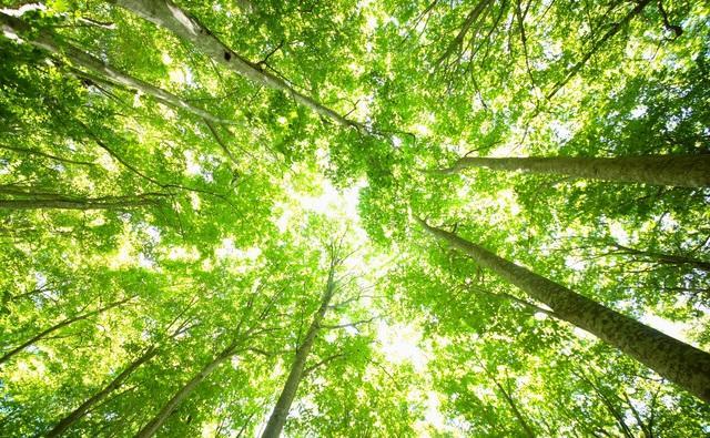 記憶の木~4月の言葉